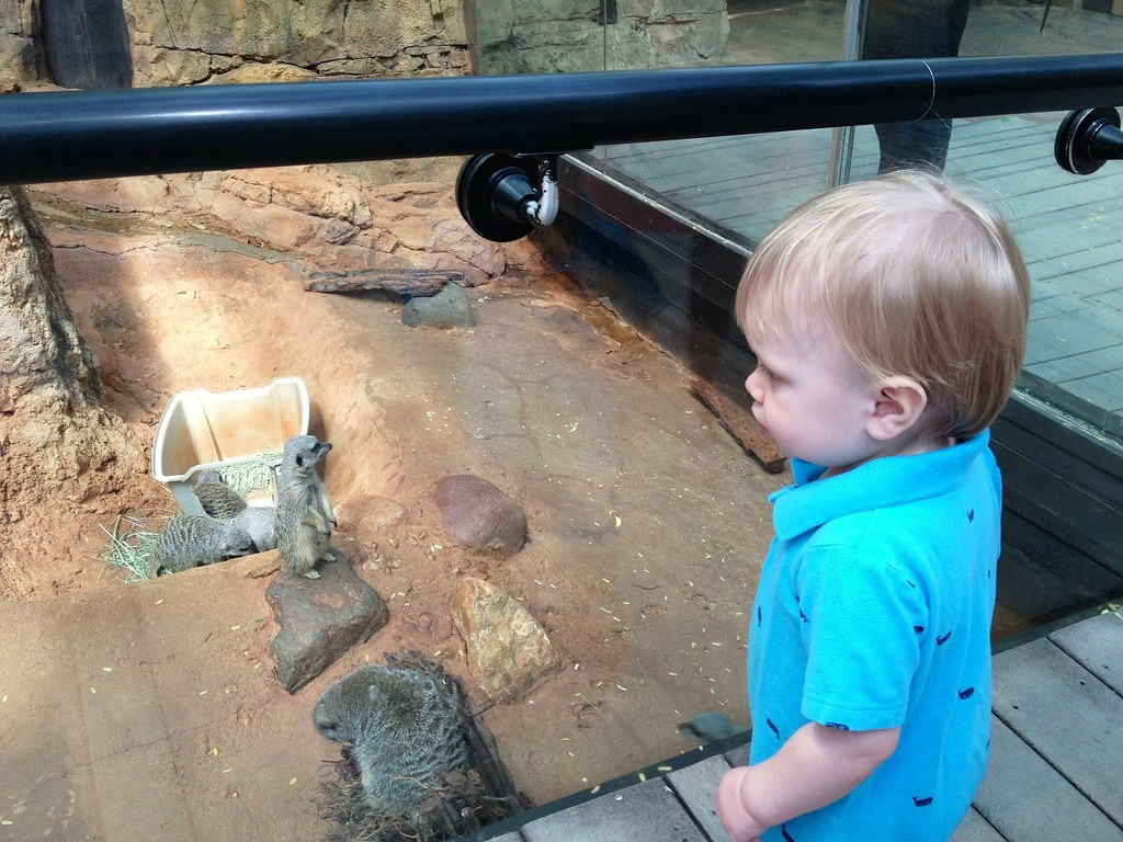 Preston with Meerkats
